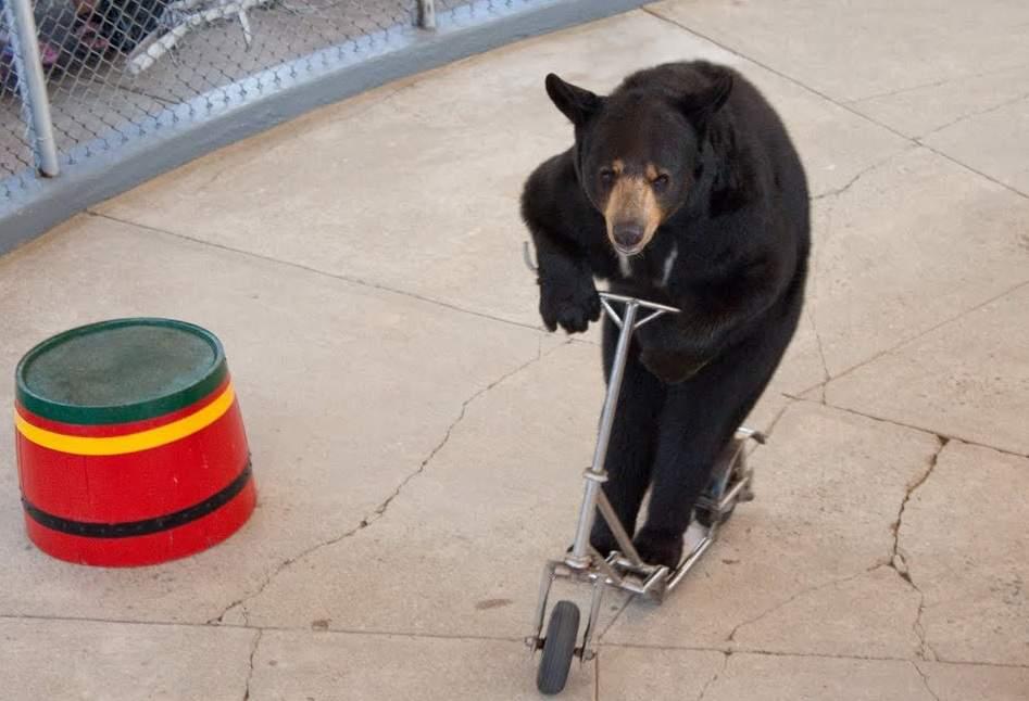 Lime se lansează la Brașov. Au apărut deja primii urși pe trotinetă!