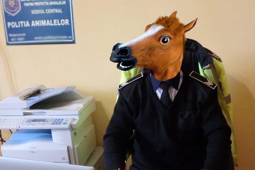 Angajat pe pile? Un cal din Strehaia va fi inspector șef la Poliția Animalelor