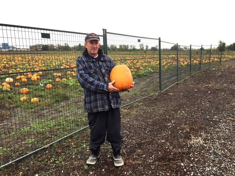 Pregătiri de Halloween. Românii au furat 1 milion de dovleci de pe câmp