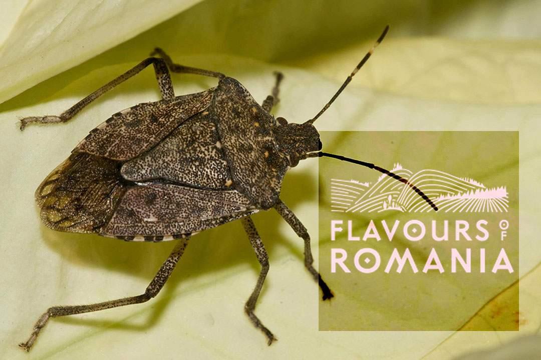 Netflix lansează Flavours of Romania, un documentar de 6 ore despre gândacul puturos