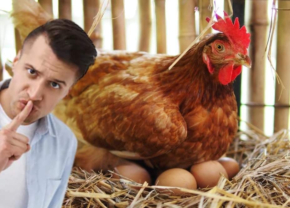 Un român a dresat găina să nu cotcodăcească după ce face ou, că i-l fură vecinii