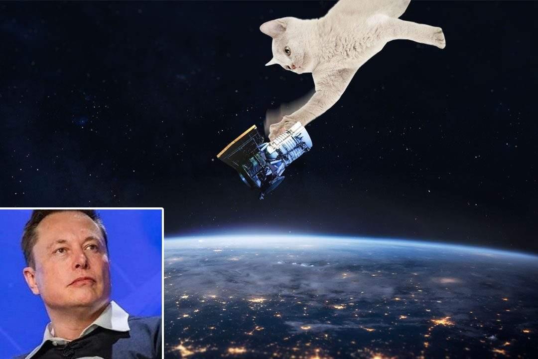 Elon Musk, devastat! O pisică spaţială i-a dărâmat 4 sateliţi de pe orbită