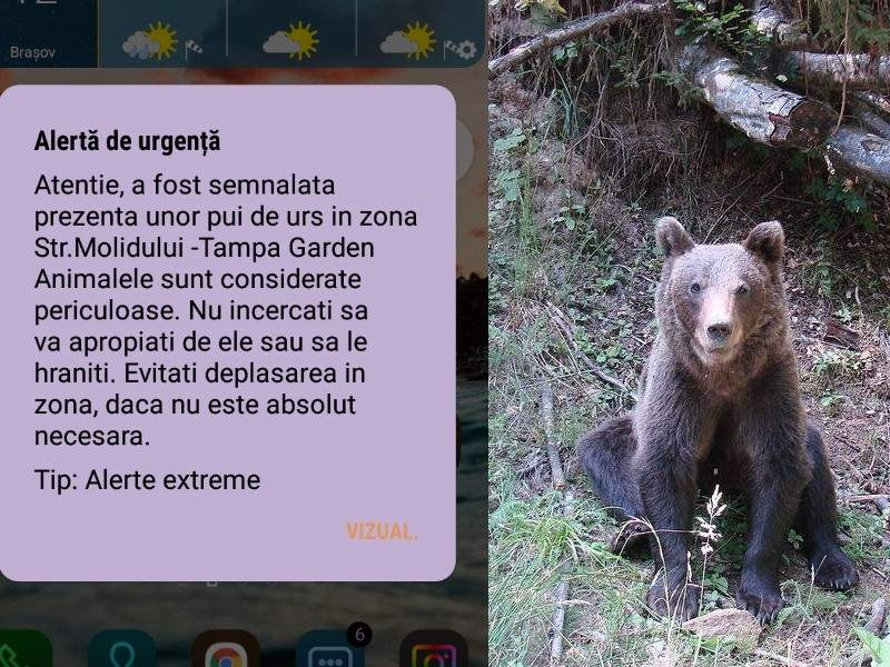Un urs cere să nu se mai trimită mesaje RoAlert despre el, invocând GDPR