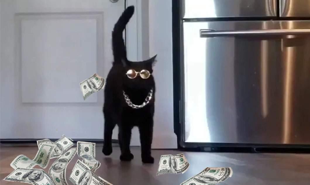 A fost arestată şi pisica lui Dan Tudorache, care în loc de păr lăsa bani
