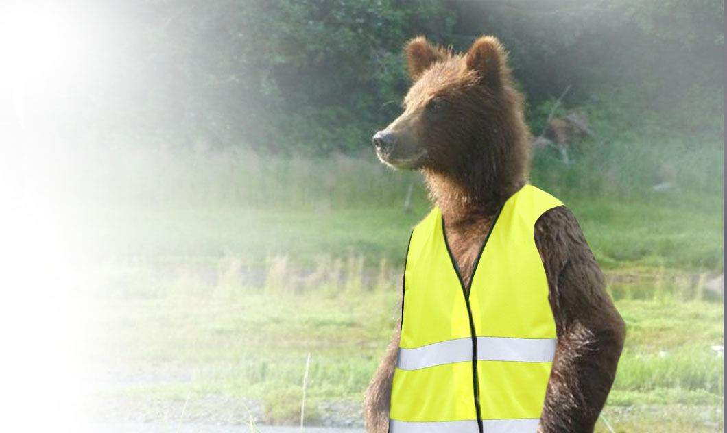 Ceață în Brașov. Urșii vor primi veste reflectorizante, ca să fie văzuți la tomberon