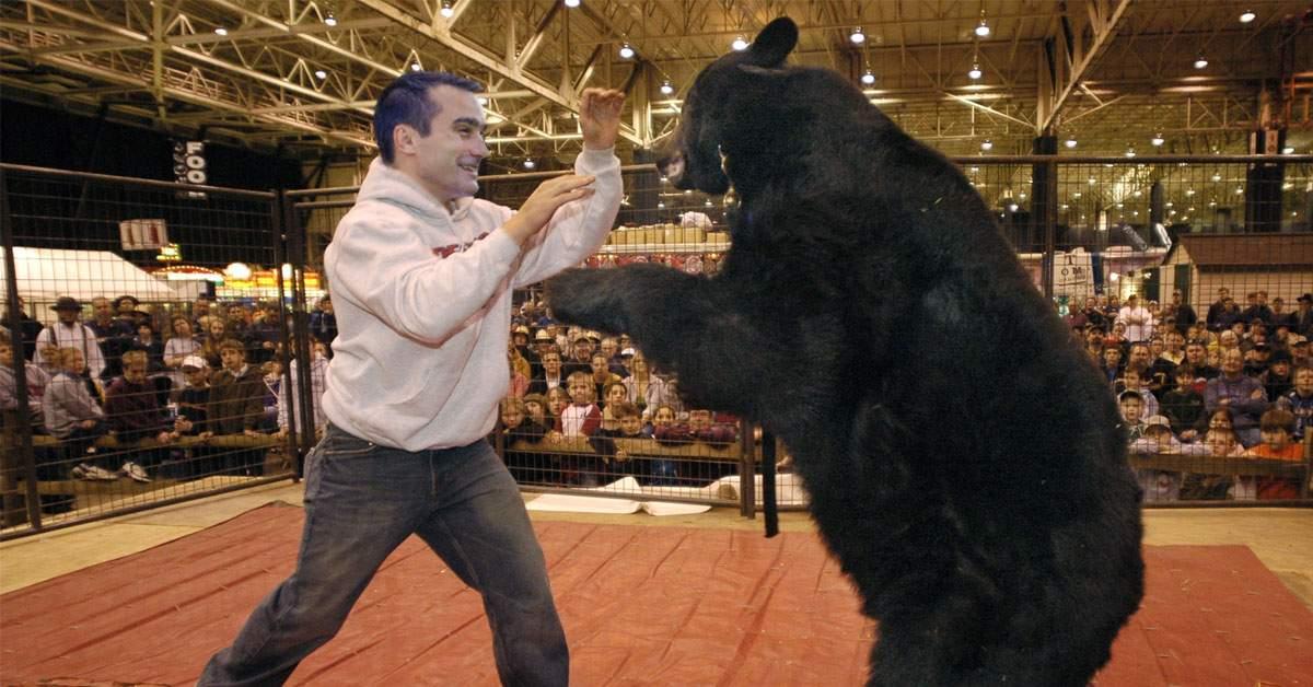 Primarul Brașovului nu poate prelua mandatul până nu învinge un urs la trântă
