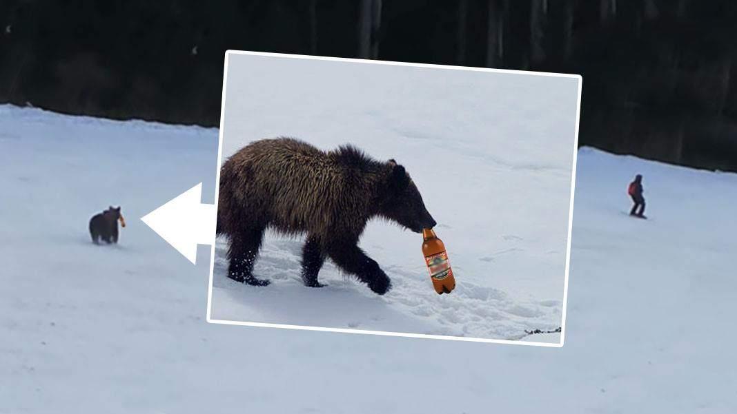 Ursul care alerga un schior pe pârtia Clăbucet încerca să-i returneze petul de bere!