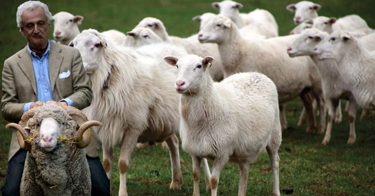 Respect! El e ciobanul stilist care îndreaptă părul de oaie cu placa