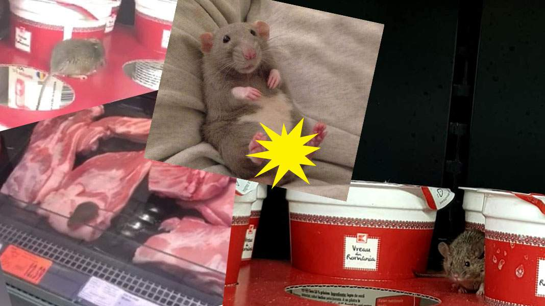 Surse: şoarecele de la Kaufland ia 500 euro pentru o şedinţă foto în tabloid