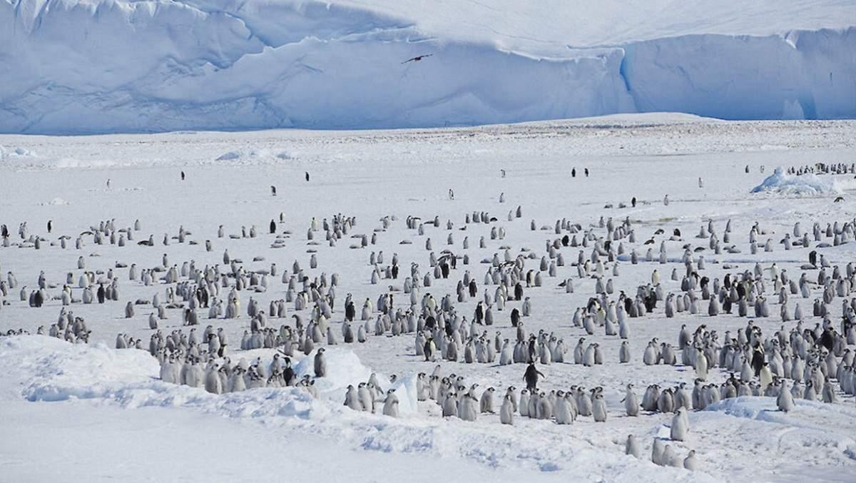 Mai sunt 3 doze de Pfizer la staţia românească de la Polul Sud