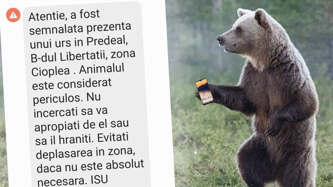 Un urs şi-a luat telefon ca să vadă când scrie de el pe RoAlert