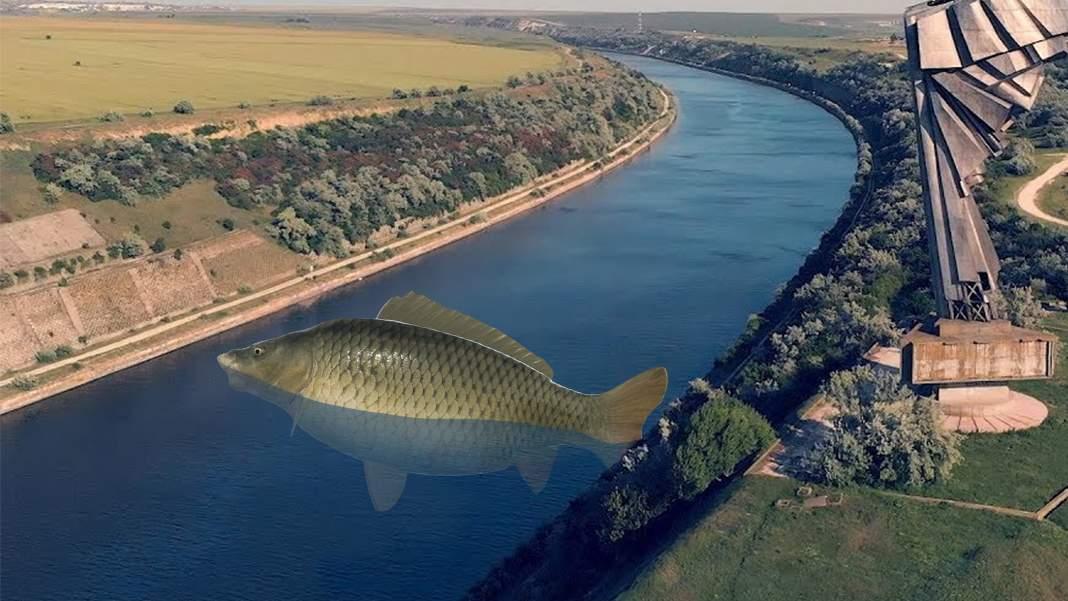 Canalul Dunăre-Marea Neagră, blocat de un crap plin de icre