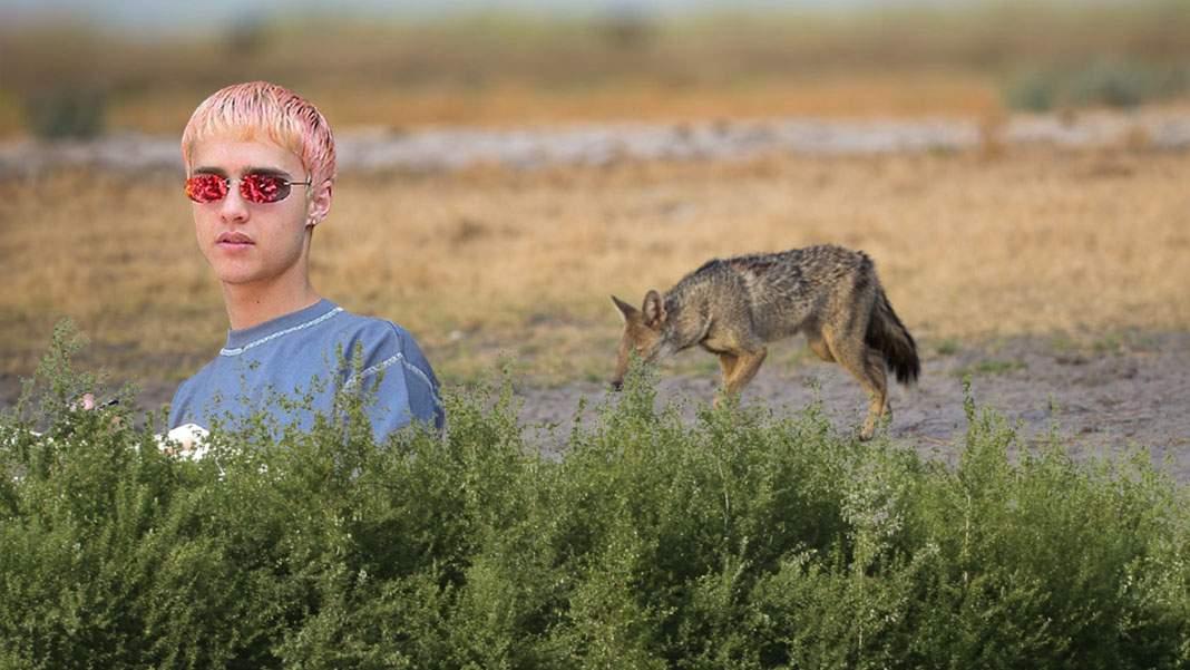 Natura renaşte! După şacali, şi Hienă de la Animal X a fost văzut în Bărăgan