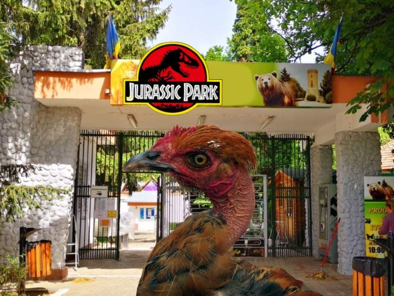Jurassic Park la Zoo Focșani. Au jumulit o găină și susțin că e pui de T-Rex