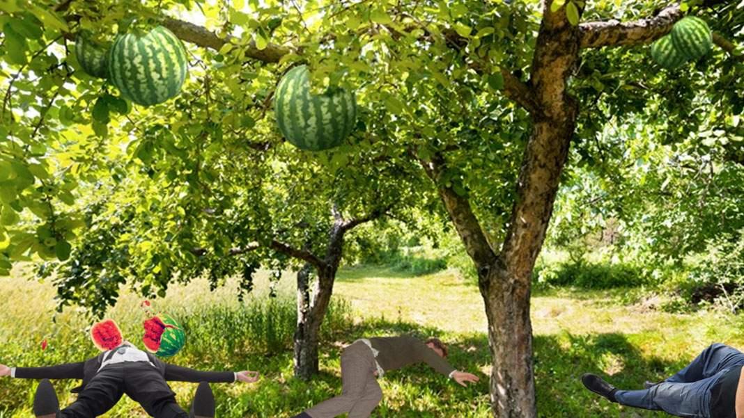 Arborele de pepeni din Dăbuleni, desemnat şi anul acesta cel mai periculos pom din ţară