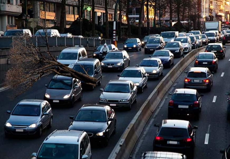 O șoferiță s-a dus la muncă cu copacul pe mașină, că n-a putut să-l dea jos
