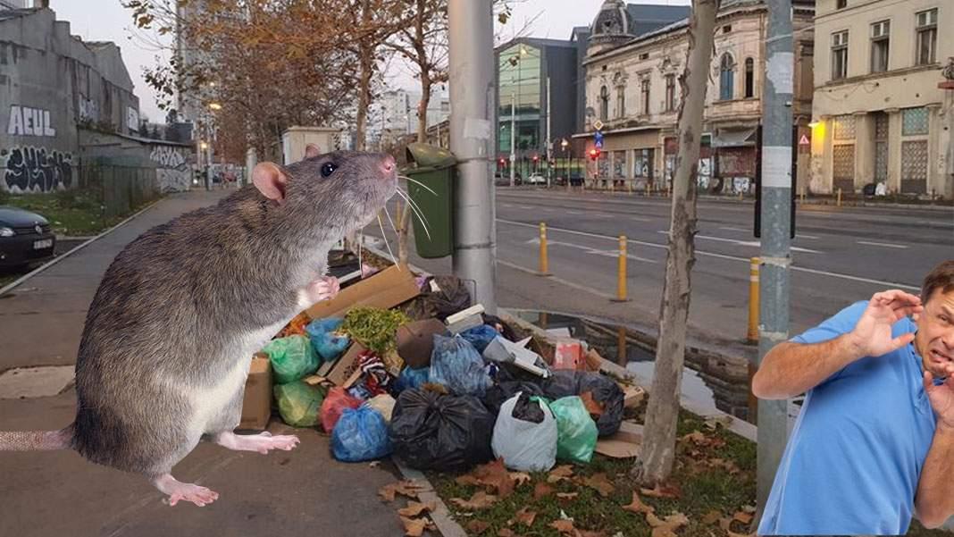 Prințul din Liechtenstein vine la București, să vâneze cel mai mare șobolan din lume