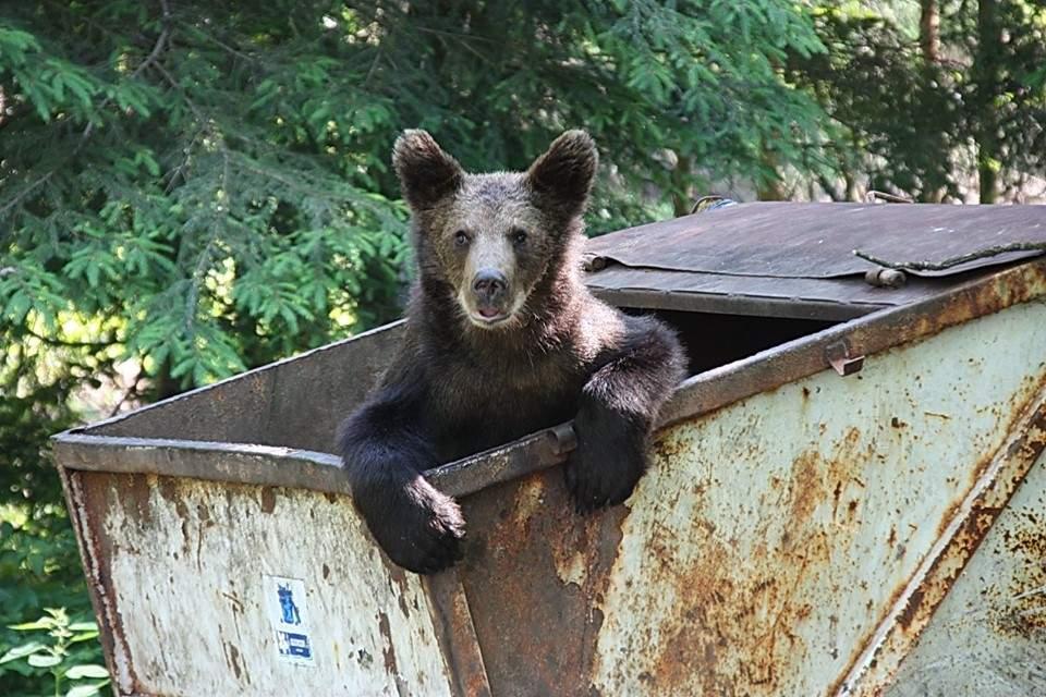 Revoltă în Braşov după legea care te obligă să treci ursul la întreţinere