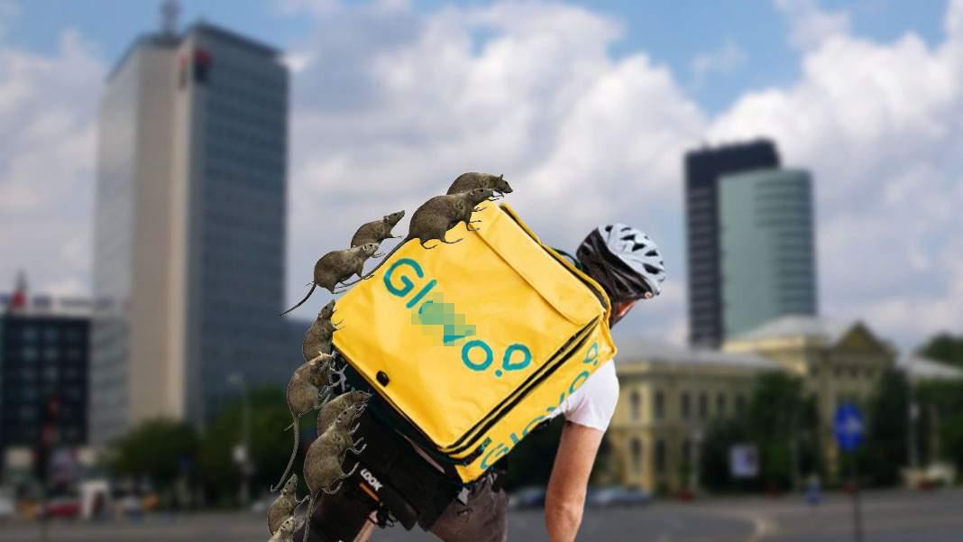Sectorul 1. Bandele de șobolani atacă bicicliști Glovo și le fură mâncarea