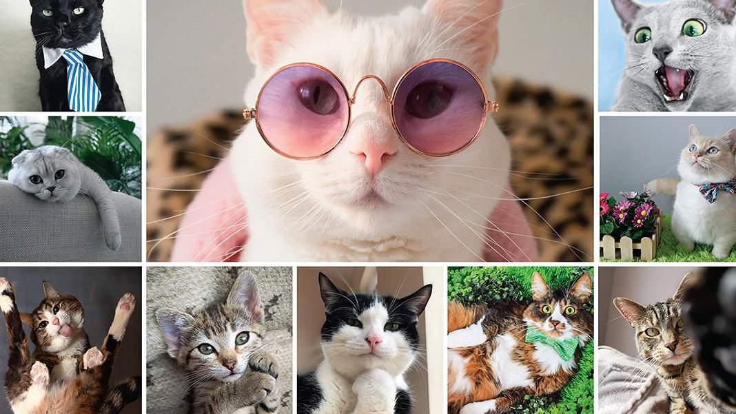 Apel către pisici: mai lăsați Instagramul, că ne-am umplut de șobolani!