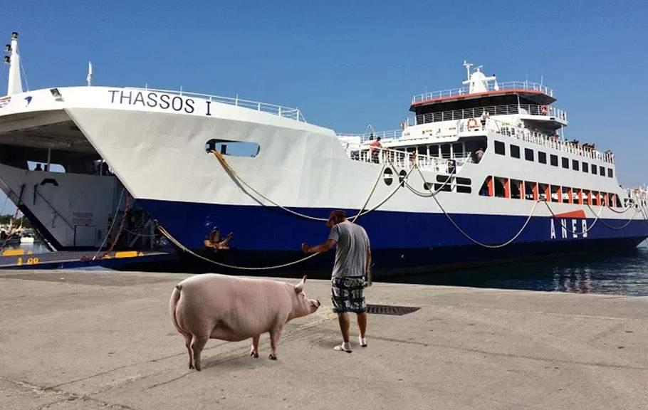 Un român se plânge că nu l-au lăsat pe feribot în Grecia cu porcul