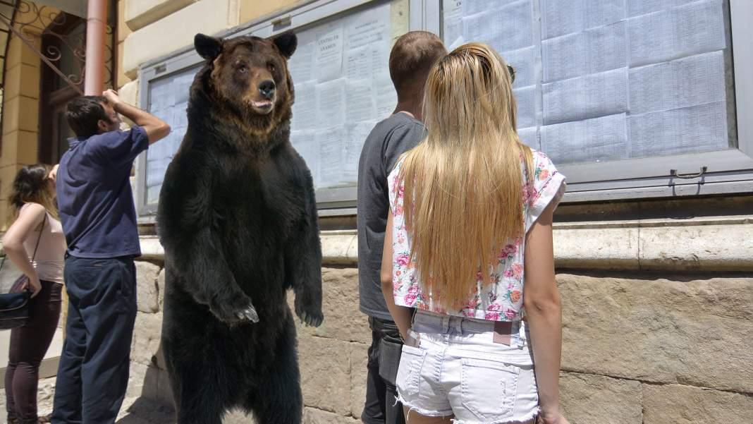 Un urs a intrat în liceul din Tuşnad ca să vadă ce notă a luat fi-su la BAC