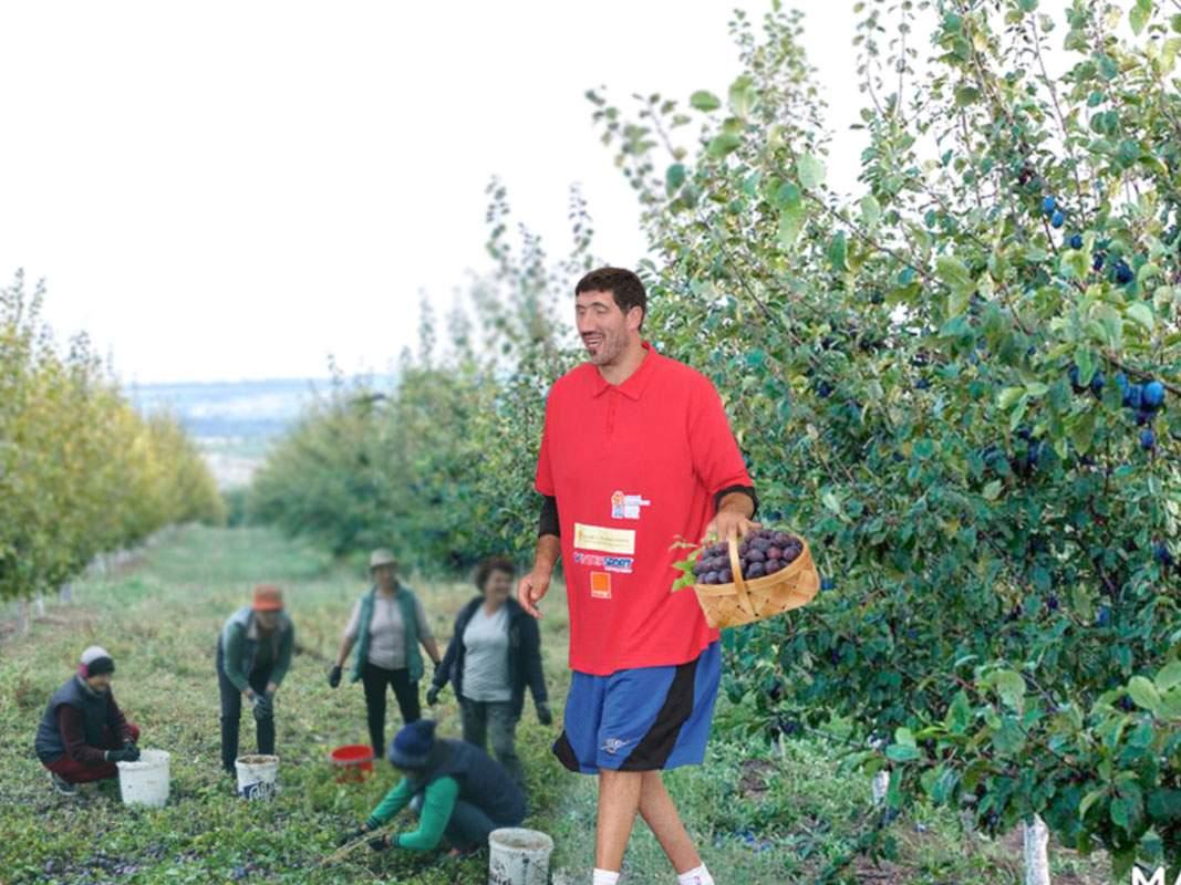 Ghiţă Mureşan vine anual în România ca să culeagă prunele, că părinţii lui n-au scară