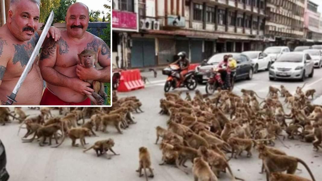 Nuţu le-a dat săbii maimuţelor din Thailanda: Se băteau cu mâinile goale, ca animalele