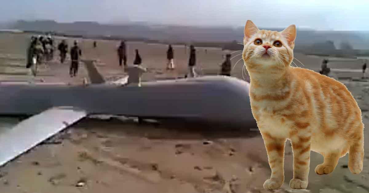 Unui român i-a adus pisica pe preş o dronă americană de 200 milioane de dolari