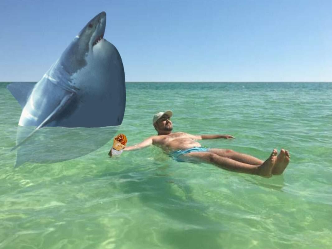 Invazie de rechini burtoşi pe litoral. Turiştii, sfătuiţi să nu intre cu şaorma în apă