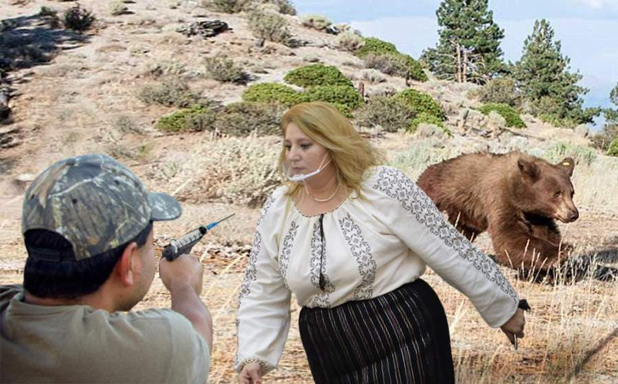 Şoşoacă a sărit să apere un urs tranchilizat de pădurar. Credea că-l vaccinează