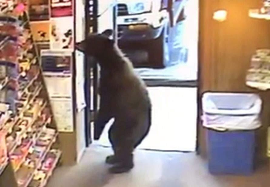 Și-au luat-o în cap! Tot mai mulți urși intră în magazine fără să poarte mască