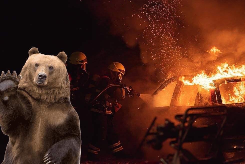 Român atacat de urs după ce a făcut accident lângă o pensiune în flăcări