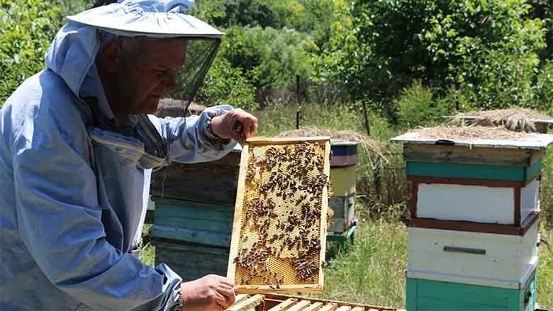 Sătul de miere, un român şi-a învăţat albinele să facă ciulama