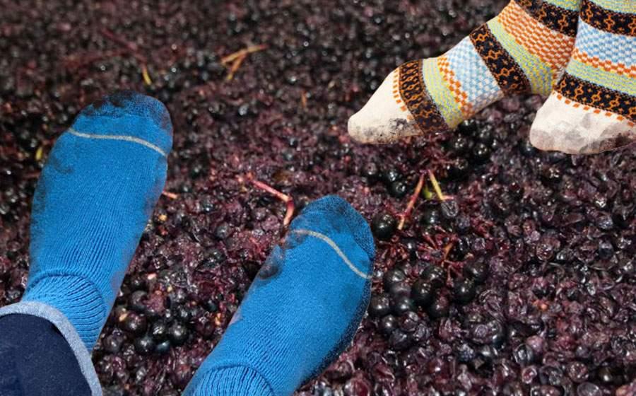 În Vrancea s-a umplut de cocalari care strivesc strugurii cu ciorapi în picioare
