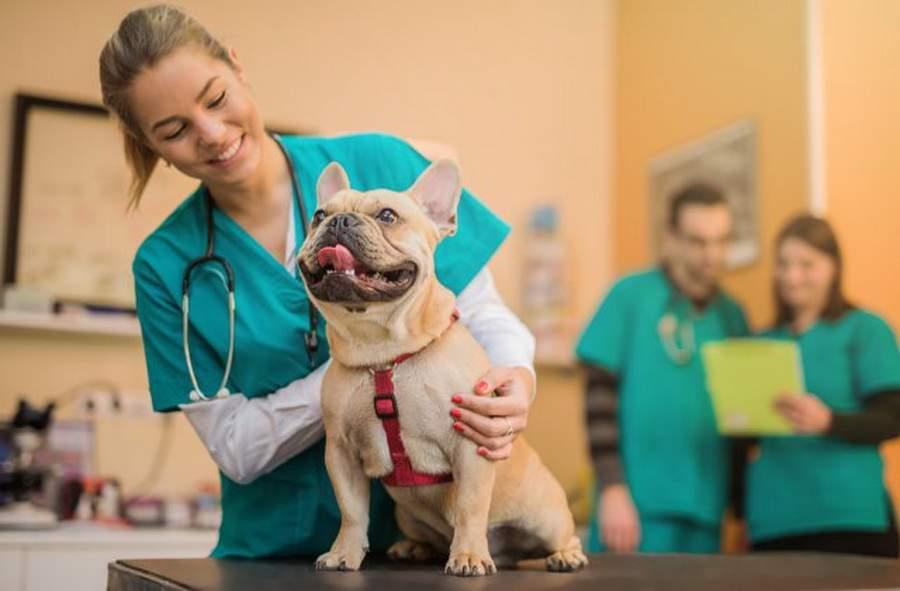 Reformă! Fiecare școală va avea un veterinar, să scoată tema din burta câinelui