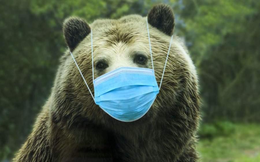 Urşii vor primi măşti ca să poată hiberna în spaţiu închis